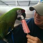 Geaux Parrot